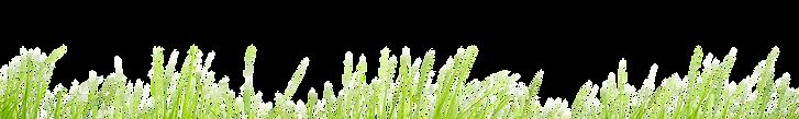 Трава гиперультраласт (1).png