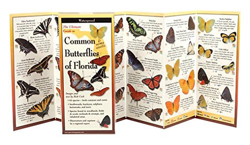 Common and Some Exotic Butterflies of Florida