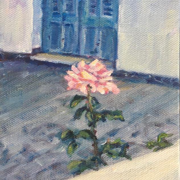 """Rose in Milos"""