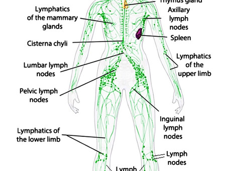 Journey to the Heart: Manual Lymphatic Drainage
