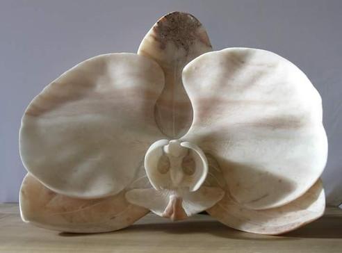 Alabaster Orchid