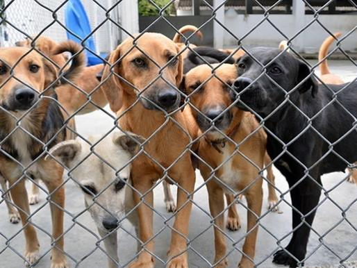 Municipio no cuenta con recursos para construir el Centro para la Atención Animal en Ibagué