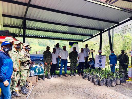 Más de 500 palmas de cera fueron sembradas en el Cañón del Combeima