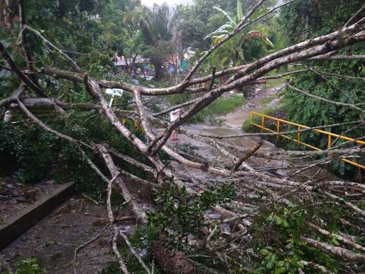 Organismos de socorro atienden emergencias por lluvias en Ibagué