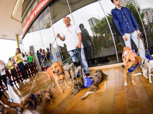 17 cachorros y caninos adultos encontraron un nuevo hogar