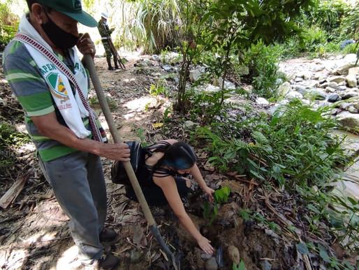 Con la siembra de 2.300 árboles, Ibagué conmemoró el 'Día de la Tierra