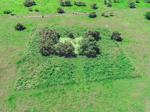 Celsia sembró más de 19 mil árboles en El Espinal