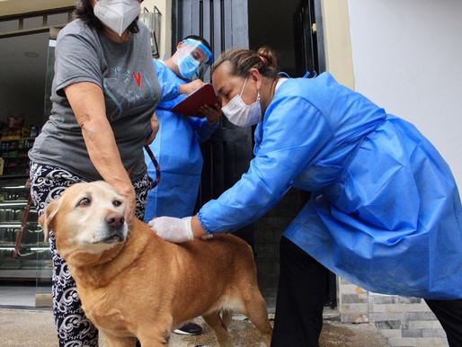 Más de 3.000 mascotas han sido vacunadas contra la rabia en Ibagué