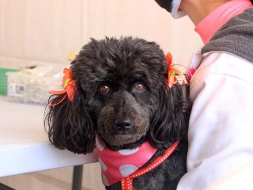 Así serán las jornadas de vacunación de mascotas contra la rabia canina y felina