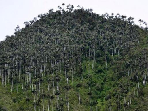 Volcán cerro Machín continúa en actividad amarilla