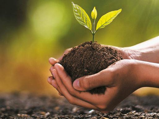 Con la siembra 400.000 árboles, Ibagué le apuesta a transformarse en una ciudad más verde