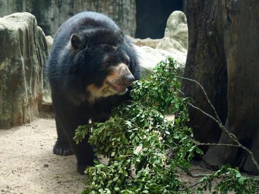 Animales no son sujetos de derechos: Corte en caso de oso Chucho
