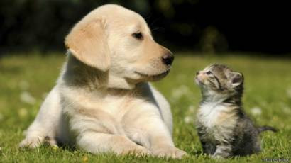 Cosas que no se debe hacer para desinfectar las mascotas