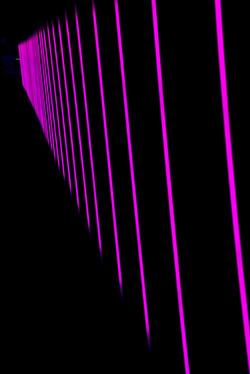 Pink Harp