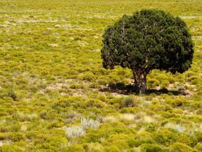 GREEN IN THE DESERT
