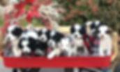 Berne pack_edited.jpg