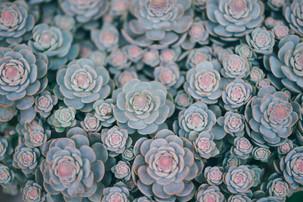 orlova-maria-1365053-unsplash.jpg