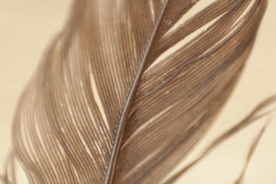 brown-feather-nature-84506.jpg