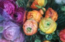 Fuchsia fin.jpg