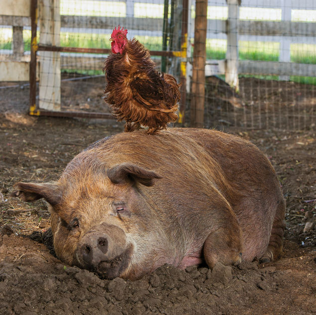 我家有一個開心農場 The Biggest Little Farm