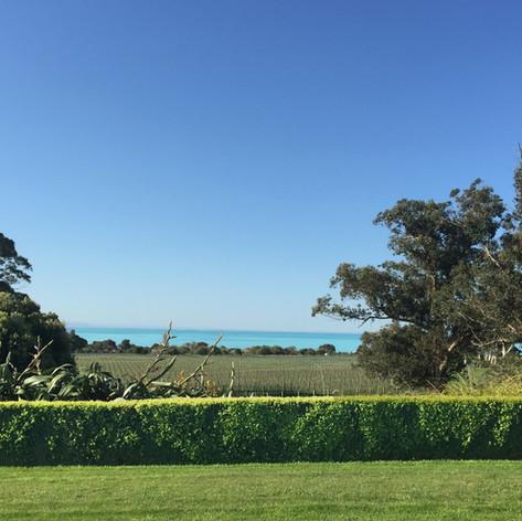 Cape Estate front lawn