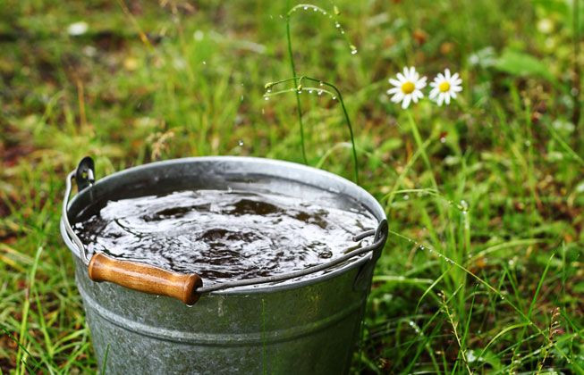Photo of a metal bucket filled with water in a grass with daisy Photo credit