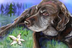 Alicia's Dog