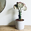 Thumbnail: Euphorbia Lactea Cristata 'Coral Cactus'