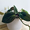 Thumbnail: Philodendron Hederaceum 'Micans'