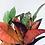 Thumbnail: Codiaeum Iceton 'Croton Plant'
