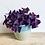 Thumbnail: Oxalis Triangularis 'Purple Shamrock'