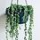 Thumbnail: Senecio Rowleyanus 'String of Pearls' Hanger