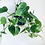 Thumbnail: Philodendron Scandens'Micans' Hanger