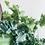 Thumbnail: Phlebodium Aureum 'Davana'