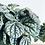 Thumbnail: Peperomia Caperata 'Burbella'