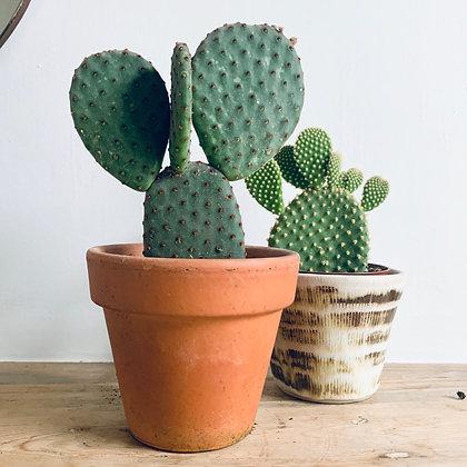 Opuntia Cactus Duo