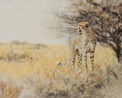 Cheetah Surveying