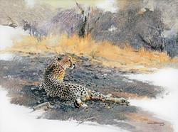Cheetah, Dawn Rising - GH013
