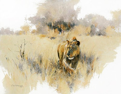 Lion in Grass - GH024