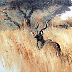 Male Kudu- GH003