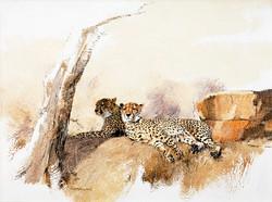 Cheetahs Resting - GH015