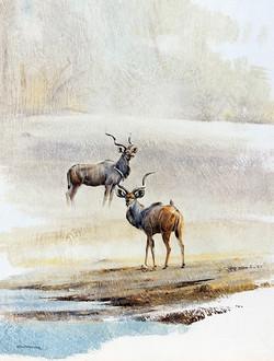 2 Kudu Bulls - GH25