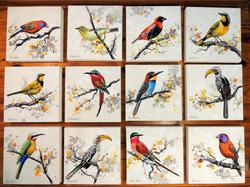 Kruger Birds collection