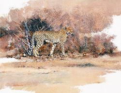 Cheetah Confidence -GH021