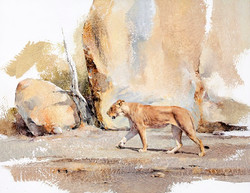 Lioness in full stride - GH020