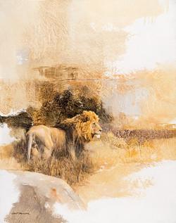 Male Lion - GH001