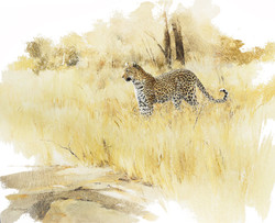 Leopard- GH018