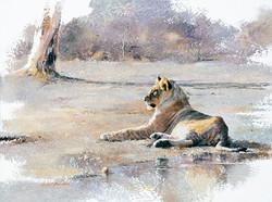 Lion juvenile - GH022