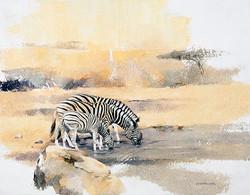 Zebras Drinking - GH014