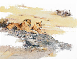 2 Young Lions - GH012